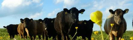 farm-animals2